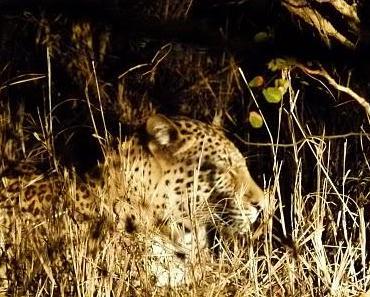 Rainer und die Leoparden