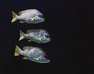 Fisch aus Horror-Zucht? WWF engagiert sich für neues Gütesiegel