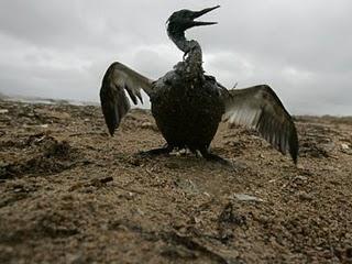 Warum BP nichts für die Ölkatastrophe kann