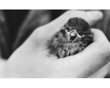 Hot Bird: Klassik-Wochen mit Vogelkochzeit