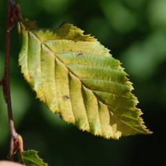 Wo ist das Grün der Blätter hin?