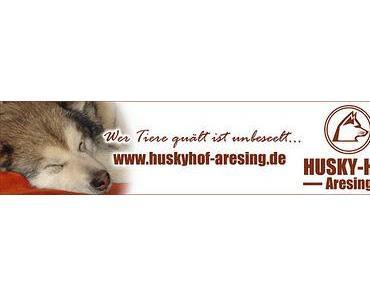 Hundeblog Award - leider nein:-)