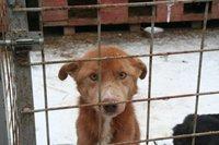 Schicksal besiegelt: Rumänische Straßenhunde werden getötet!