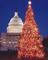 Deutsche brachten Weihnachtsbaum nach Amerika