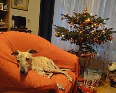 Lucky und sein Weihnachtsgeschenk