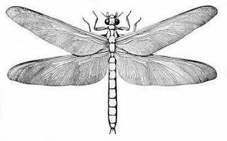 Buchtipp: Wer war der Stammvater der Insekten?