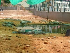 Kambodscha's Tierwelt – Wie es mit den Krokodilen in der Schule weitergeht …