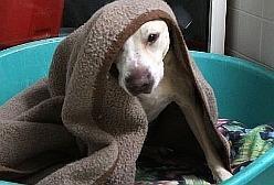 Tierschutzverein für Berlin bittet Berliner um Deckenspenden