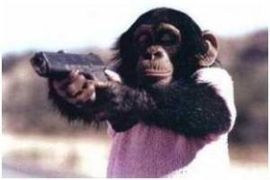 Warum haben Affen Schmerzen?
