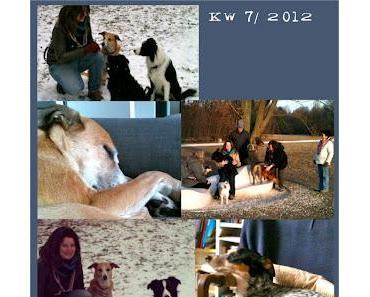 KW 7/2012