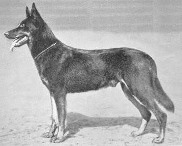 Hundeproduktion in Deutschland