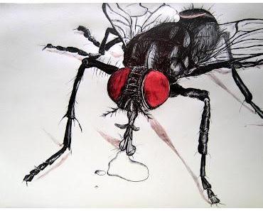 Die Fliege und eine Ode an die Toten Hosen
