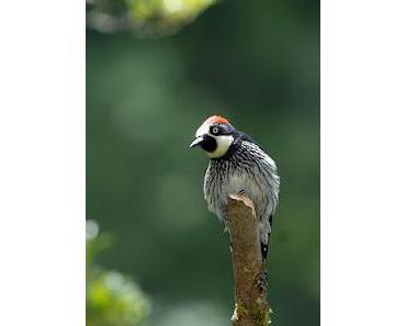 Reisebericht Costa Rica Fotoreise