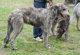 Älteste archäologische Nachweise des Hundehandels