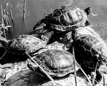 Welt-Schildkröten-Tag