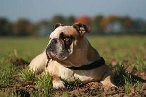 Hundefutter, nur das Beste für den Hund