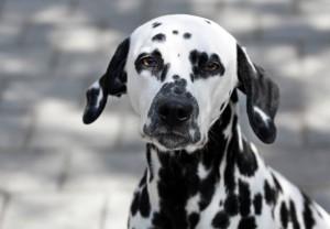 Bosch Hundefutter – was spricht dafür?