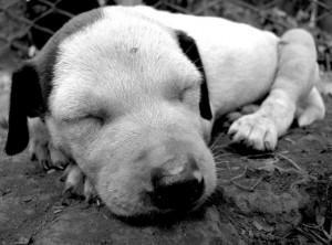 Hundefutter von Wolfsblut – natürliche Tiergesundheit auf höchstem Niveau