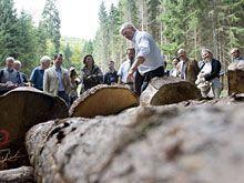 Forstwirtschaft soll ökologische, soziale und wirtschaftliche Funktionen der Wälder sichern