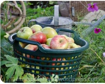 Aus meinem Garten Ende Oktober: Apfelernte und 165 Liter eigener Bio-Apfelsaft
