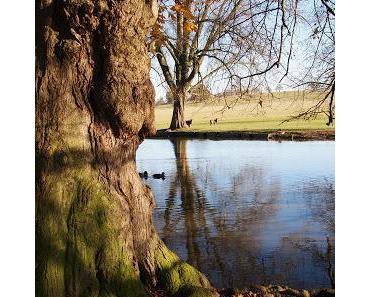 Herbstspaziergang im Park von Woburn Abbey