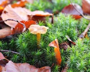 Der Herbst und seine Trompeten: Ein emotionaler Trip zu den heimlichen Stars des Pilzwaldes