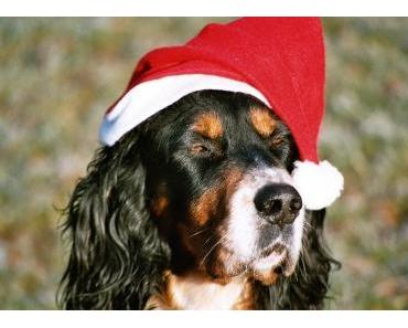 Hund als Weihnachtsgeschenk?