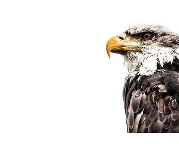 Nationaler Tag des Vogels – National Bird Day