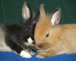 Leben mit Kaninchen