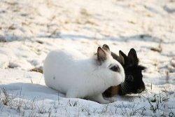 Kaninchen im Winter draußen halten – geht das?