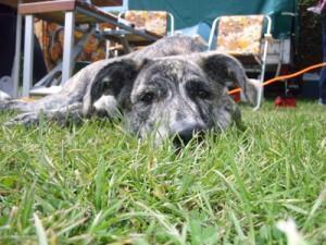 Hundefutter Blogbeitrag