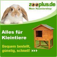 Kaninchen: Augen sind weiß – was tun?