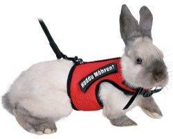 Kaninchen an die Leine – tun Sie das nicht