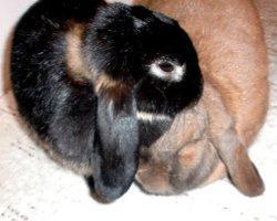 Wie zähme ich meine Kaninchen?