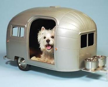 Wenn ein Hund auf Reisen geht- erster Campingwagen für Hunde