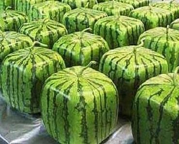 Viereckige Wassermelonen in Japan