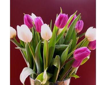 Tulpen in einer Vase arrangieren