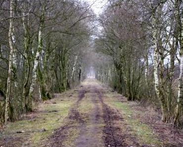 More Moor