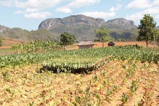 Maries Reisetipps aus Kuba, Viñales Tal