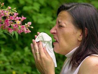 Allergien auf dem Vormarsch. Was kann ich dagegen tun?