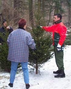 Weihnachtsbäume – ganz frisch vom Förster