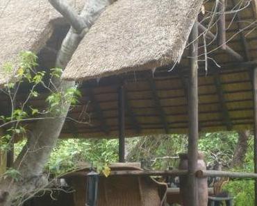 Reisebericht Südafrika: der Ruf der Wildnis, Teil 1: Luxux pur