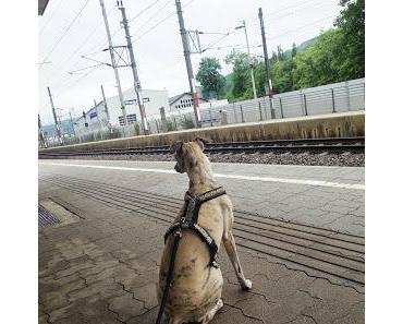 Lucky und die Eisenbahn