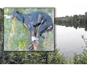 Zeugen gesucht  1000 € Belohnung / Grausam: Gefesselter Hund ertrank qualvoll im Gifhorner Maikampsee