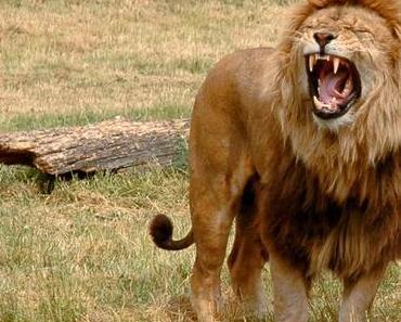 Die Fabel vom gesättigten Löwen • Erzählung aus Ägypten