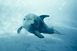 Helsinki-Deklaration: Rechte für Wale und Delfine
