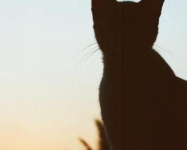 Weltkatzentag   World Cat Day