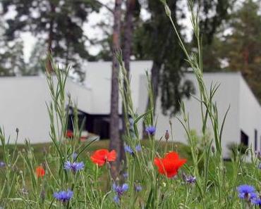 gartenprojekte teil 6 - die wildwiese
