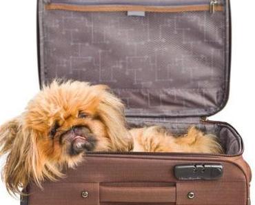Reiserücktrittsversicherung kann auch für den Hund abgeschlossen werden!