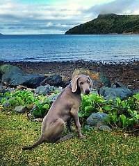 """Queensland lässt Hund über Land und Leute """"bellen"""""""